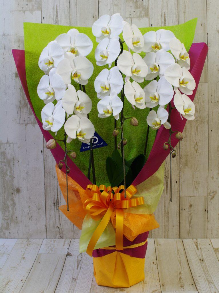 お祝い胡蝶蘭3F
